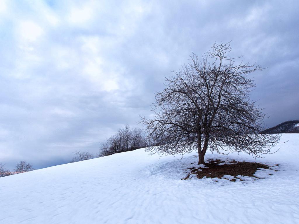 Tree/Snow