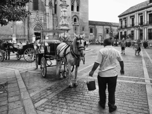 Bucket, coachman and horse