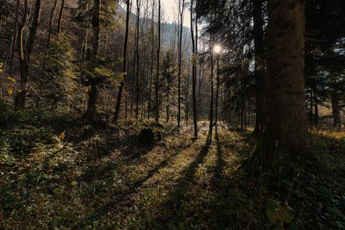 Valle Pesio #04