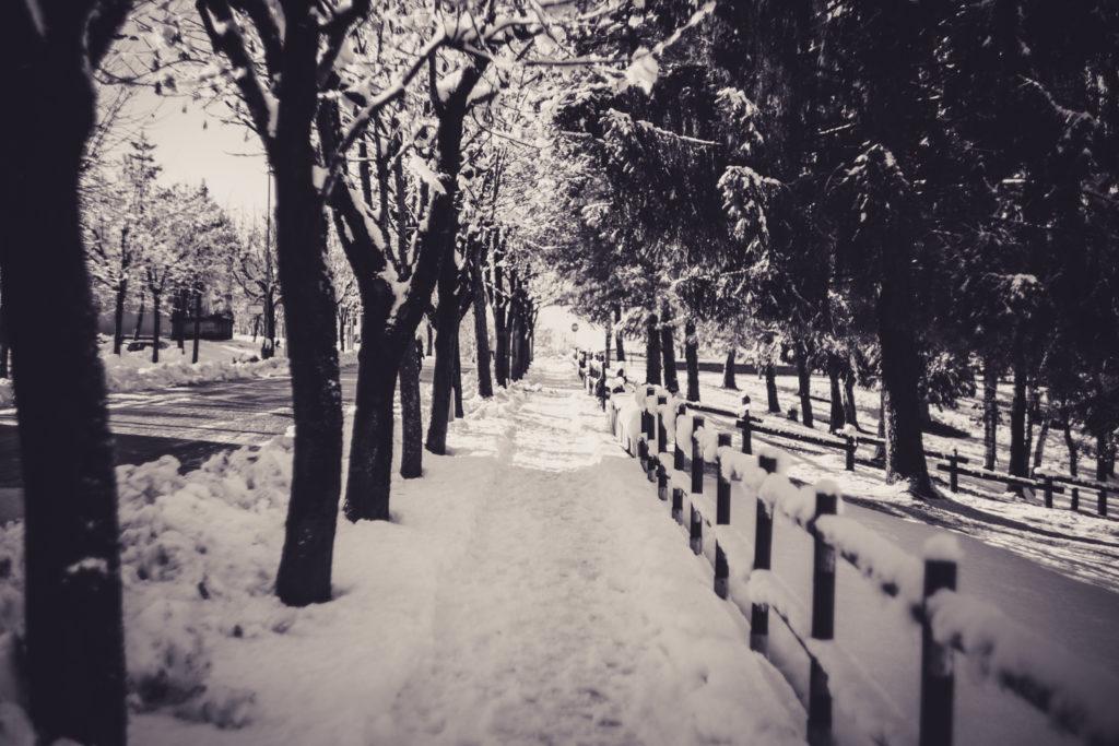 Beinette dopo la nevicata /05
